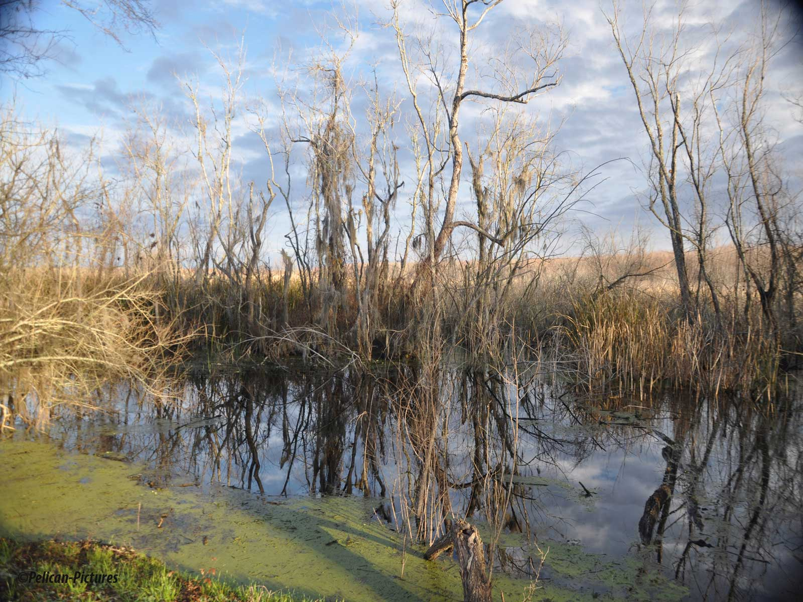 Swamp During Drought
