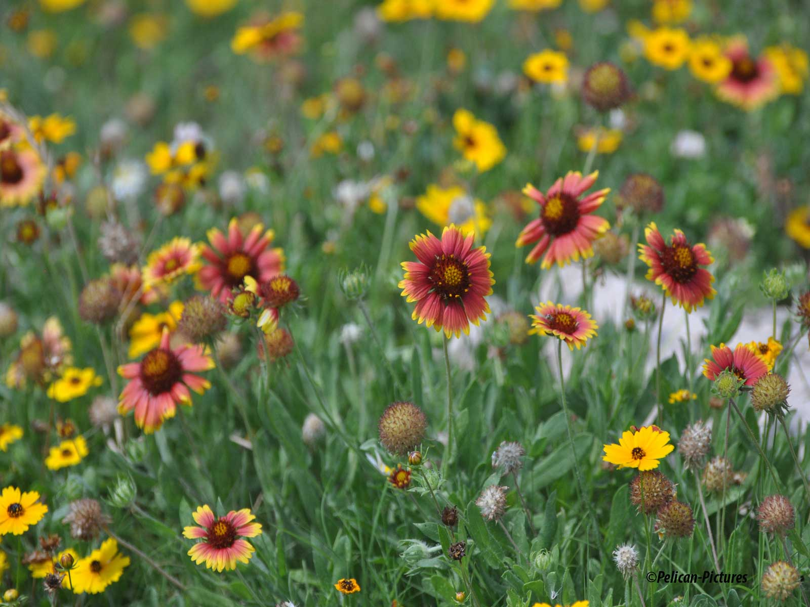 Wildflower Medley